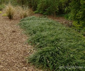 Grasses for Dry Shade
