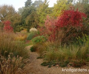 Gravel Garden at Knoll