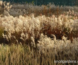 Fabulous Backlit Grasses