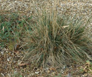How to Look After Grasses