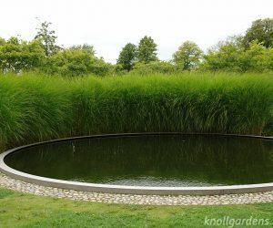 Grasses for Informal Screens & Dividers